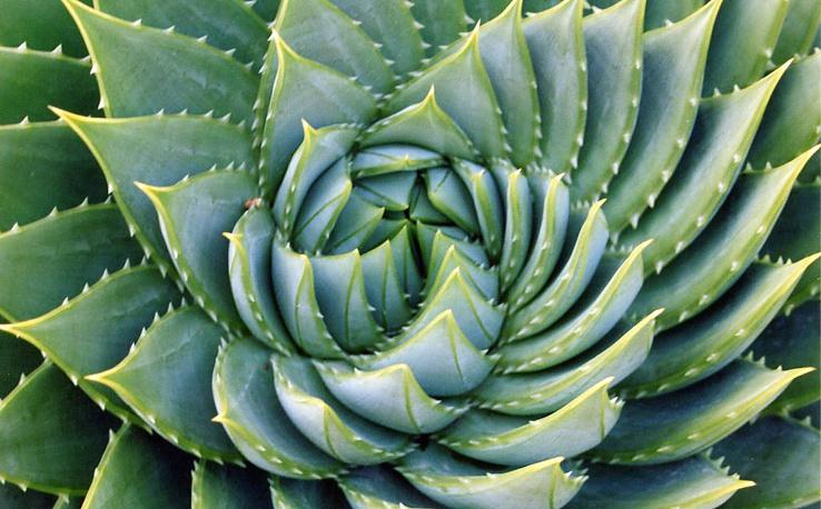 Golden Spiral in Nature