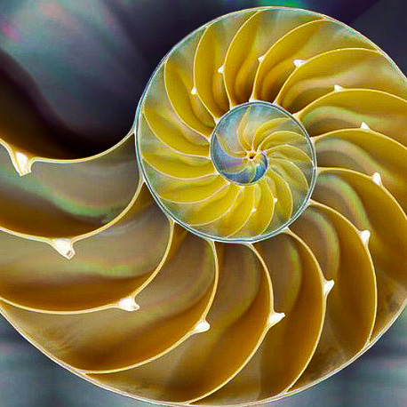 Golden Spiral in Shell