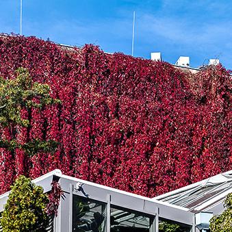Autumn in the Botanical Garden od Buda